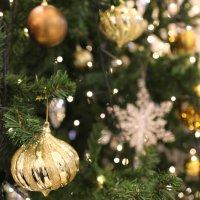12月のぴよぴよくらぶはクリスマスフォト